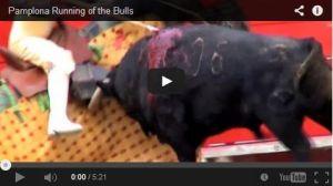 bull video