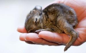 baby-rabbit_2186248k