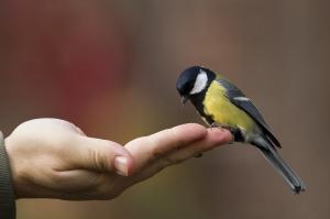 bird-in-the-hand