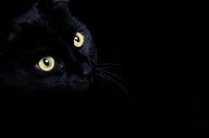 black_cat_02