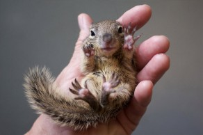 squirrel-in-my-hand
