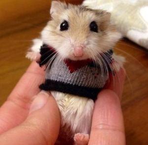 Note: not an animal cruelty case. Just a very cute hamster.